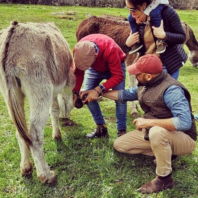 Donkey Home 1