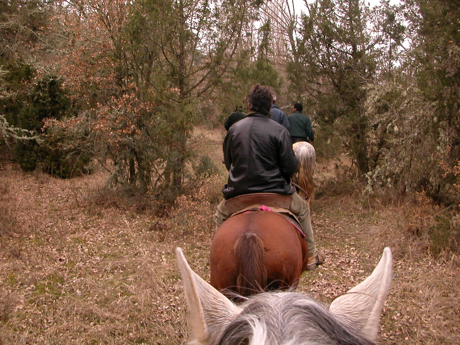 L'équitation 3 Grajera