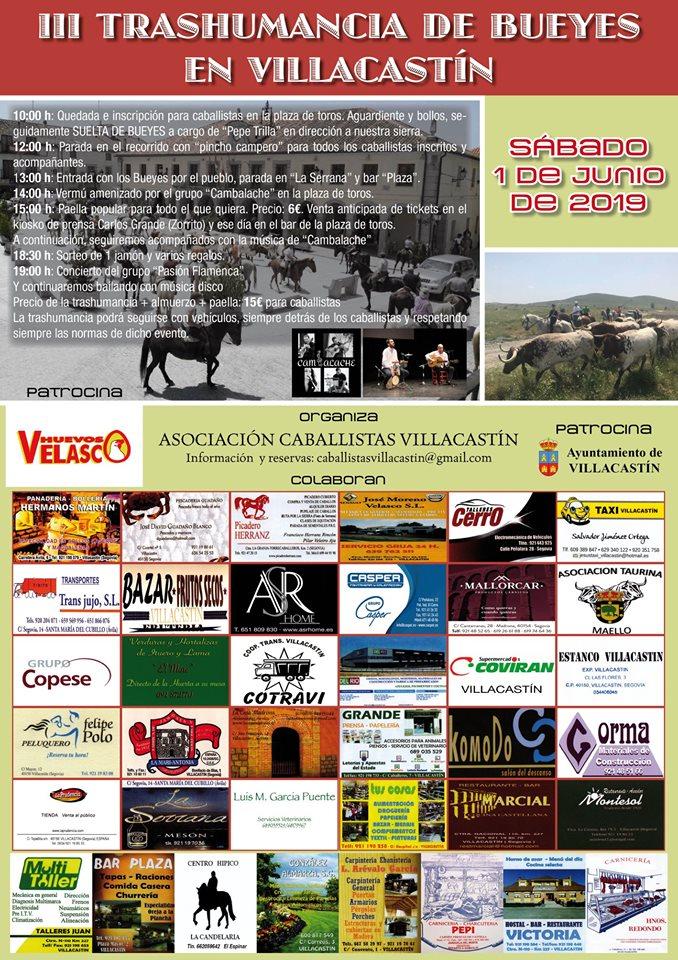 oxen transhumance 19