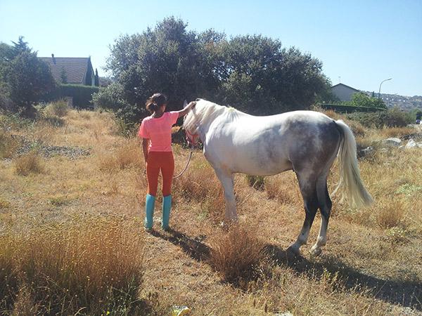 cheval à bascule 1