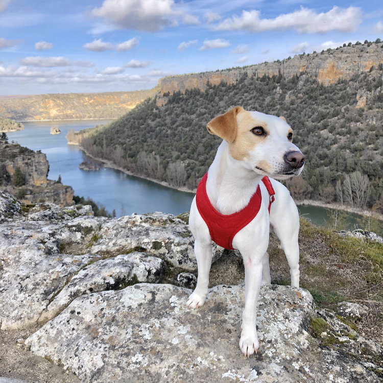 Pipper discovers Segovia